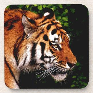 Gorgeous Tiger Wild Cat Coaster