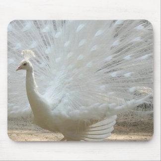 gorgeous white peacock mouse pad
