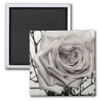Gorgeous White Rose Magnet