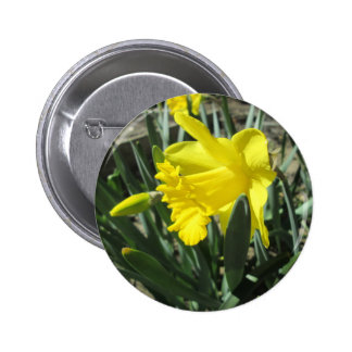 Gorgeous Yellow Daffodils 2 Inch Round Button