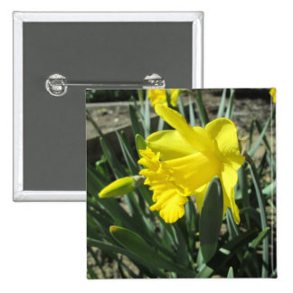 Gorgeous Yellow Daffodils 2 Inch Square Button