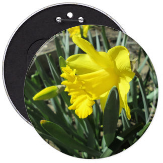 Gorgeous Yellow Daffodils 6 Inch Round Button