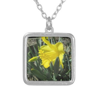 Gorgeous Yellow Daffodils Silver Plated Necklace