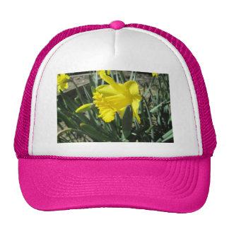Gorgeous Yellow Daffodils Trucker Hat