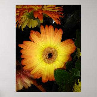 Gorgeous Yellow Gerbera Daisy Close-up Poster