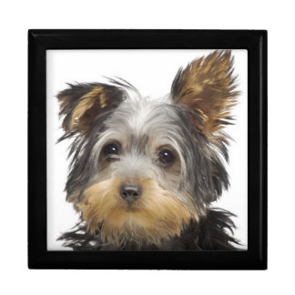 Gorgeous Yorkshire Terrier Gift Box