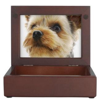 Gorgeous Yorkshire Terrier Keepsake Box