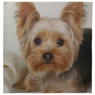 Gorgeous Yorkshire Terrier Napkin