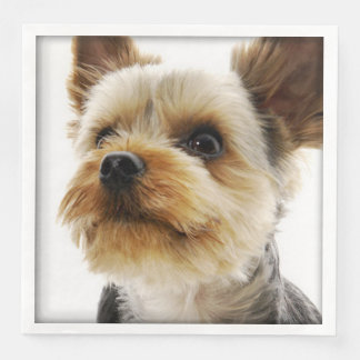 Gorgeous Yorkshire Terrier Paper Dinner Napkin