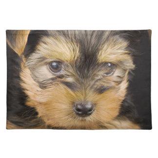 Gorgeous Yorkshire Terrier Placemat