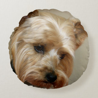 Gorgeous Yorkshire Terrier Round Pillow