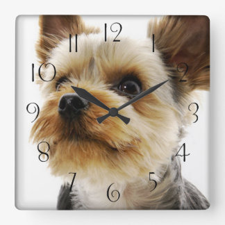 Gorgeous Yorkshire Terrier Square Wall Clock