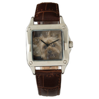 Gorgeous Yorkshire Terrier Watch