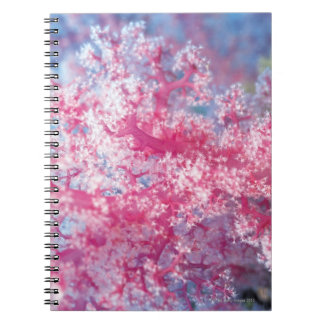 Gorgonian coral note book