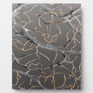 Gorgonian coral plaque