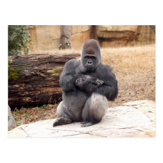 Gorilla_019 Postcard