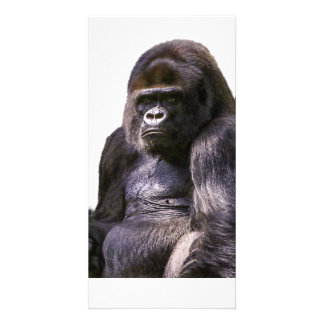 Gorilla Ape Monkey Card