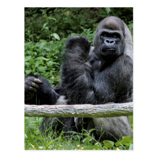 Gorilla Ape Primate Wildlife Animal Photo Postcard