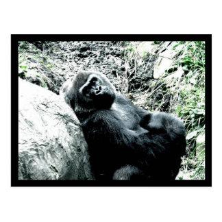 Gorilla Diva Postcard