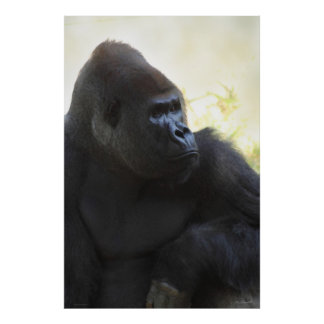 Gorilla Gaze Poster -40x60 -other sizes available