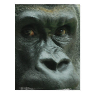 Gorilla in the Mist  Postcards
