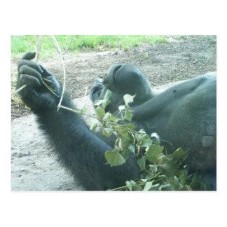 gorilla plays postcard