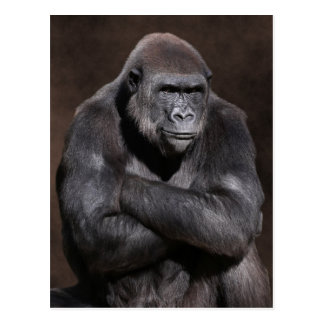 Gorilla with Attitude Postcard