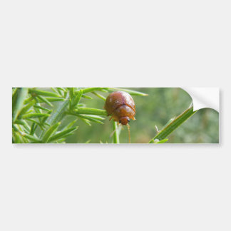 Gorse Beetle Bumper Sticker