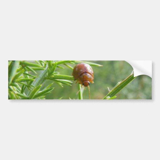 Gorse Beetle Bumper Stickers