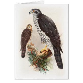 Goshawk John Gould Birds of Great Britain Wildlife Card