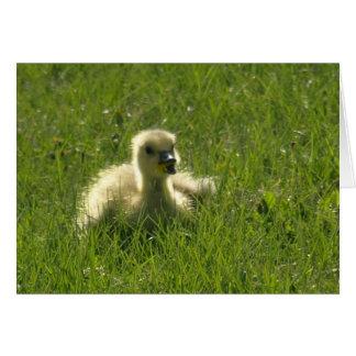 Gosling Card