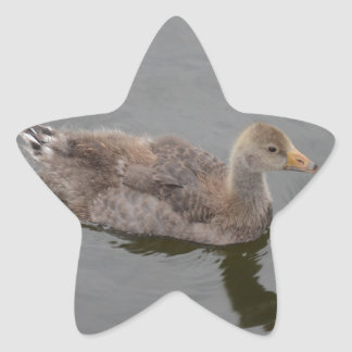 Gosling Star Sticker
