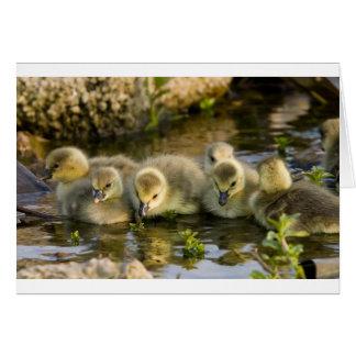 Goslings Card