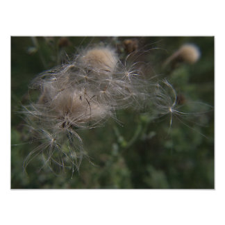 Gossamer Seed Pods Photo Print
