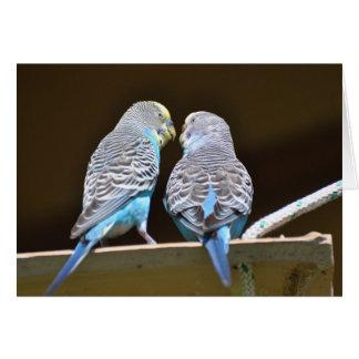 Gossiping Budgies Card