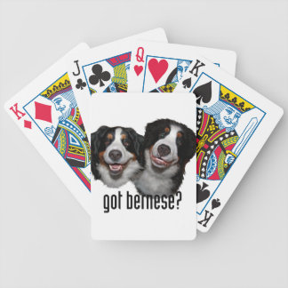got bernese? bicycle playing cards
