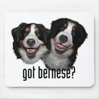 got bernese? mouse pad