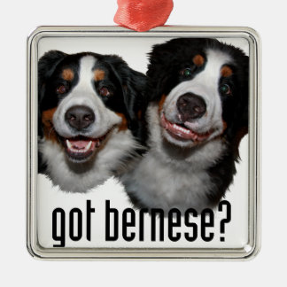 got bernese? Silver-Colored square ornament
