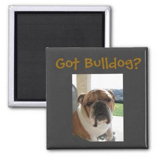 Got Bulldog? Magnet
