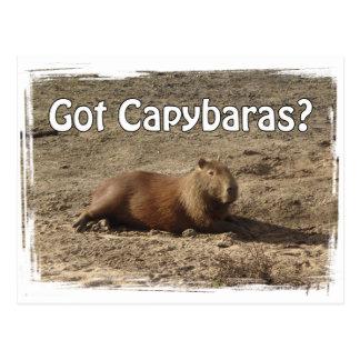 Got Capybaras?  Tees and Gifts Postcard