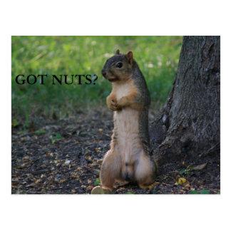GOT NUTS? POSTCARD