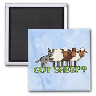 got sheep square magnet