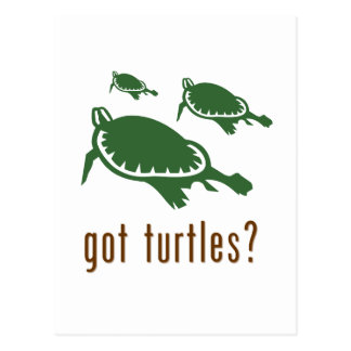 got turtles? postcard