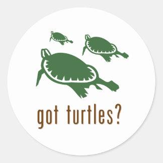 got turtles? round sticker