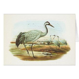 Gould - Common Crane - Megalornis grus Card
