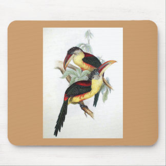 Gould - Curl-Crested Aracari Toucan Mouse Pad