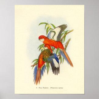 Gould - Fiery Parakeet Portfolio Poster