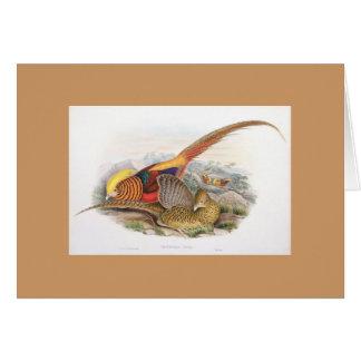 Gould - Golden Pheasant Card