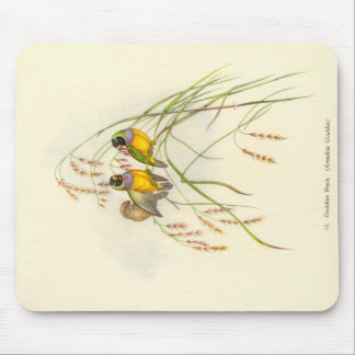 Gould - Gouldian Finch Mouse Pad