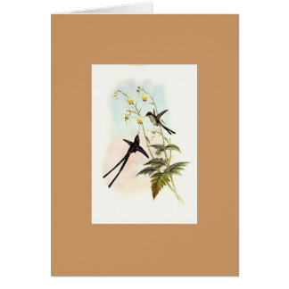 Gould - Graceful Train-bearer Hummingbird Greeting Card